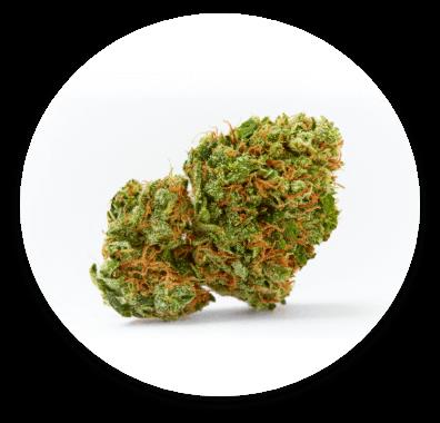 North Medical marijuana flower